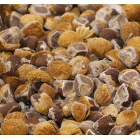 Hawaiian Baby Woodrose - HBWR - Argyreia Nervosa - Starting at € 45,- per 250 gram